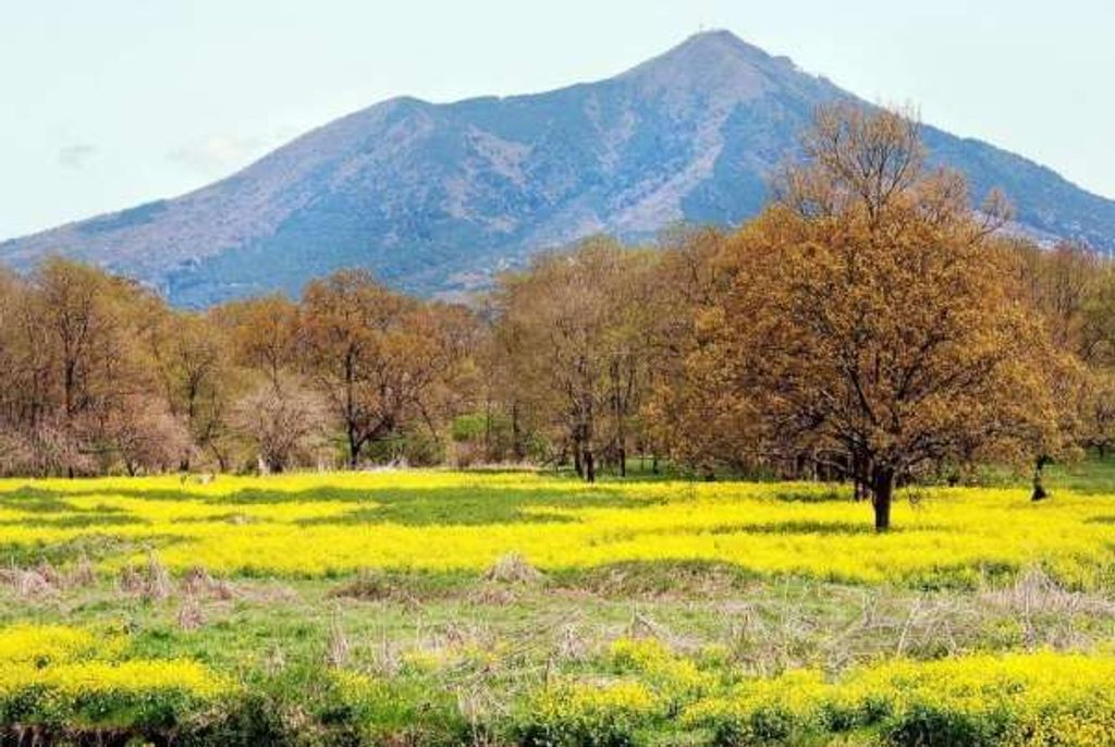 3 Mountains Ideal For A Day Trip From Tokyo