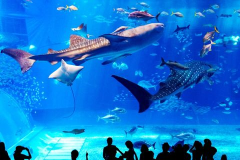 Request a Personalized Okinawa Main Island Tour Itinerary