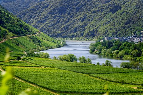 Request a Personalized Moselle Valley Tour Itinerary