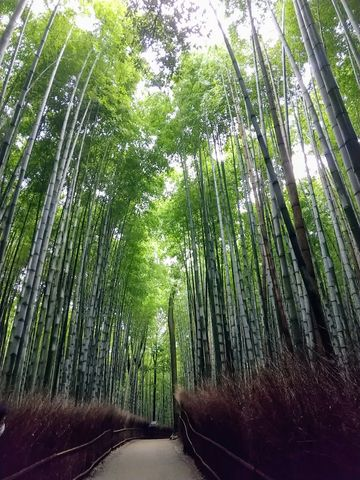 Arashiyama, welcome to the subtle and profound world