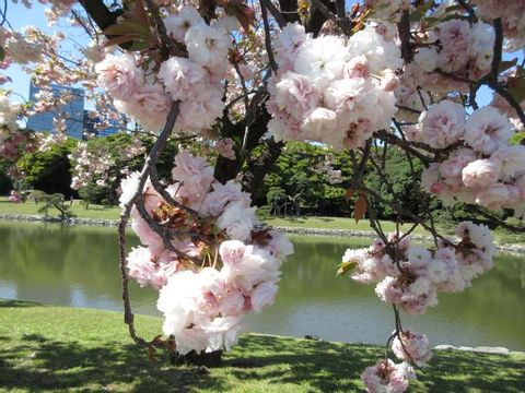 Hamarikyu Japanese garden, Sumida river cruse and Plus one