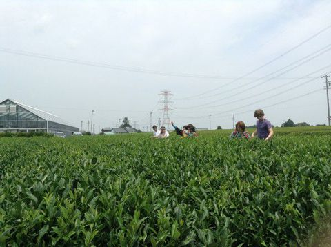 Shizuoka Tea Tour - to know everything about tea in the largest plantation area!