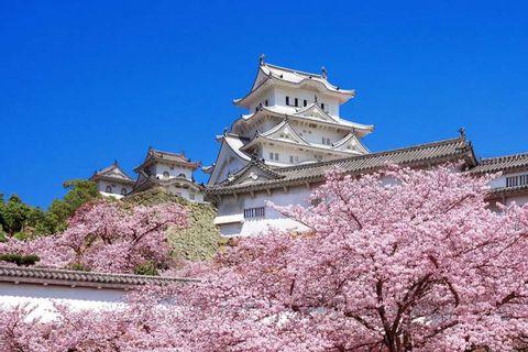Exploración del Castillo Himejijyo, 4 horas