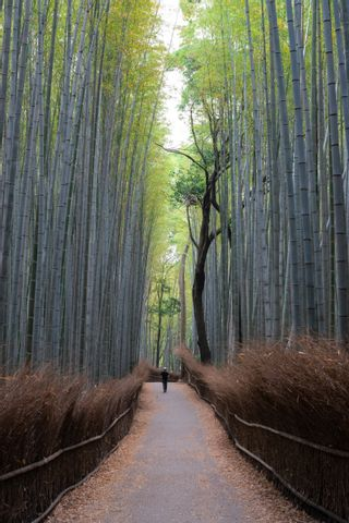 Explore Kyoto and Arashiyama in one day trip