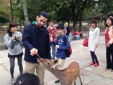 Explore the best of Nara