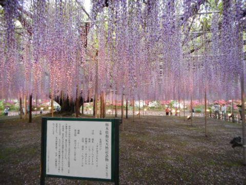 A day trip to Ashikaga Flower Park from Tokyo/Omiya area