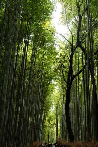 Arashiyama one day sightseeing guided tour