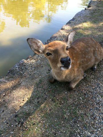 Nara oneday tour