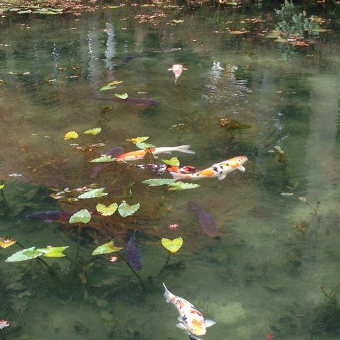 Monet's Pond, Knife‒city Seki & Washi‒hometown Mino