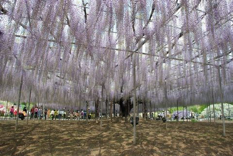 Ashikaga city ー The Flower Park, Kurita Ceramic ware Museum, Ashikaga Gakko, Banna-ji Temple
