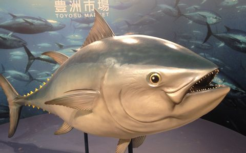 The world largest fish markets