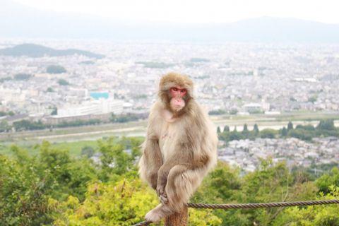 Be a Monkey!!  Experience (Nov.15th - 30th)