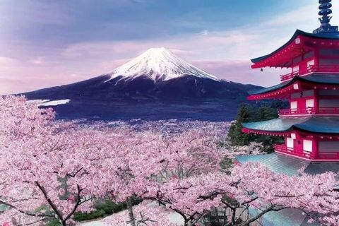 Private Sightseeing Charter in Mt.Fuji or Hakone from Tokyo
