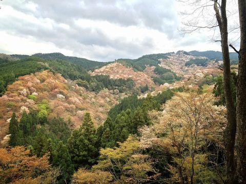 Visite Guidée d'une Journée en Montagne Japonaise : Yoshino