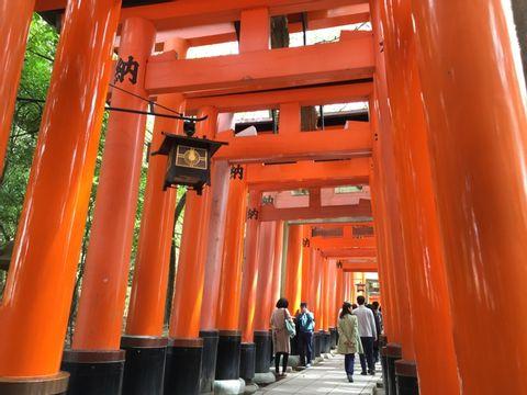 Kyoto 6 Hour Tour - Fushimi Inari, Arashiyama, Kinkakuji