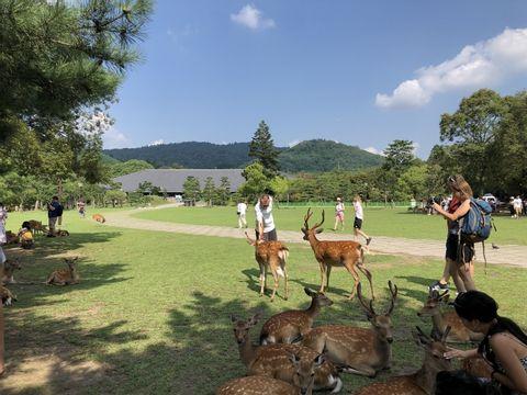 Nara Day Trip from Kyoto
