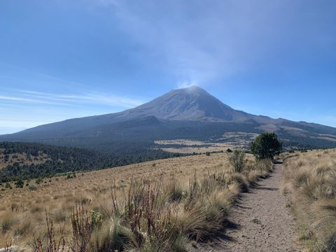 Ashes and trees, Volcanoes Hiking Tour