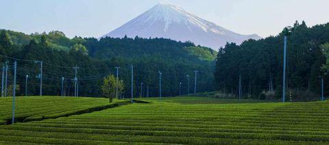Request a Personalized Shizuoka Tour Itinerary