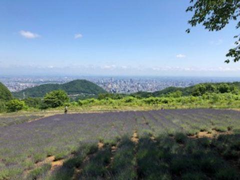 Sapporo Lavender spots