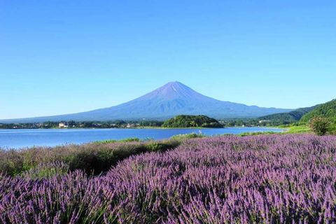 Lake Kawaguchi Field Day Tour with Mt. Fuji Landscape