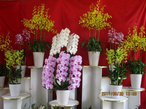 Tottori Flower Tour