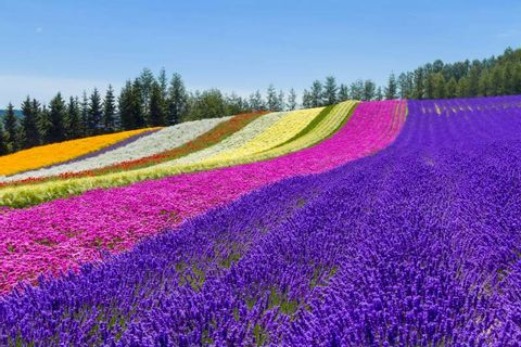 Furano and Biei Private Day Tour (Up to 15 passengers)