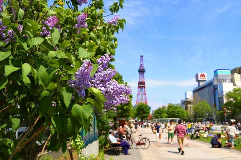Sapporo Private Day Tour (Up to 15 passengers)