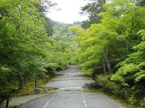 Arashiyama Sagano Bamboo Forest
