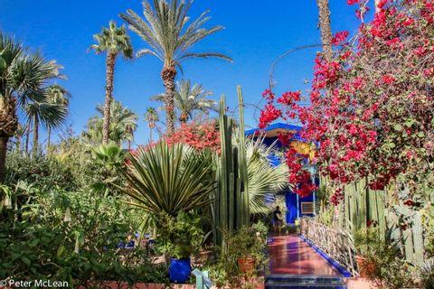 Camel Ride and Marrakech Garden City