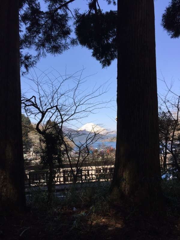 Hakone cedar shaded old route 1