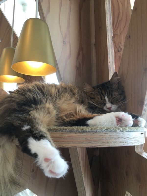 So adorable!! Cat cafe in Harajyuku. There are different animal cafes. Must experience!!