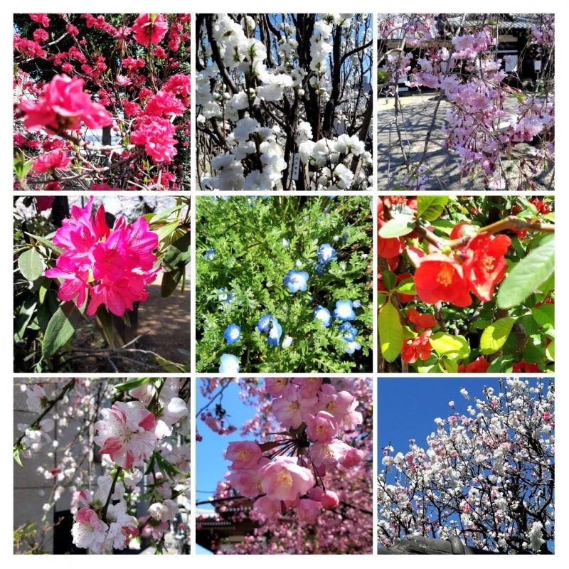 Spring flowers in Tokyo