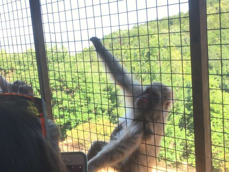The Arashiyama Monkey Park Iwatayama attracts many foreign visitors.