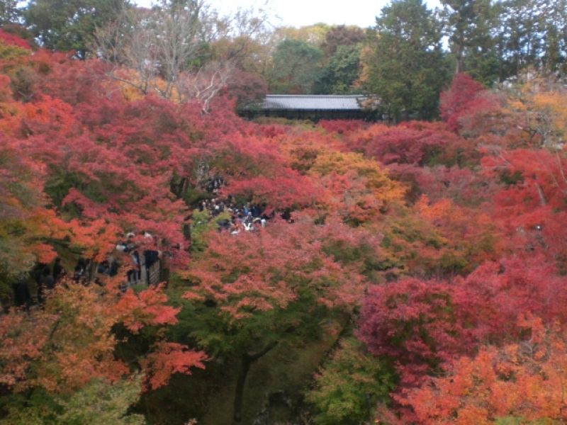 Autumn foliage, Tofukuji Temple, Kyoto