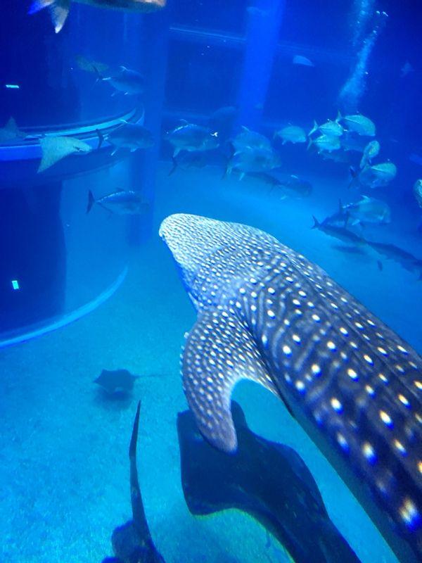 Osaka the finest aquarium KAIYUKAN