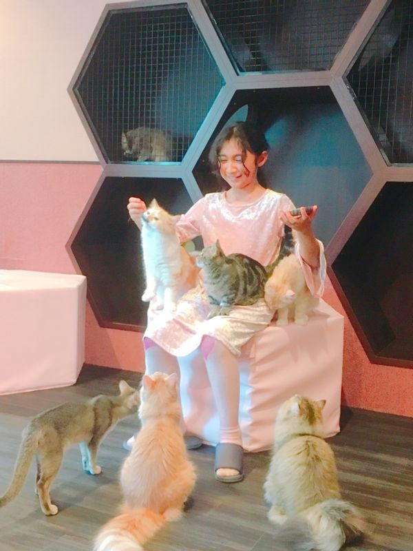 She is the QUEEN of cat cafe XD