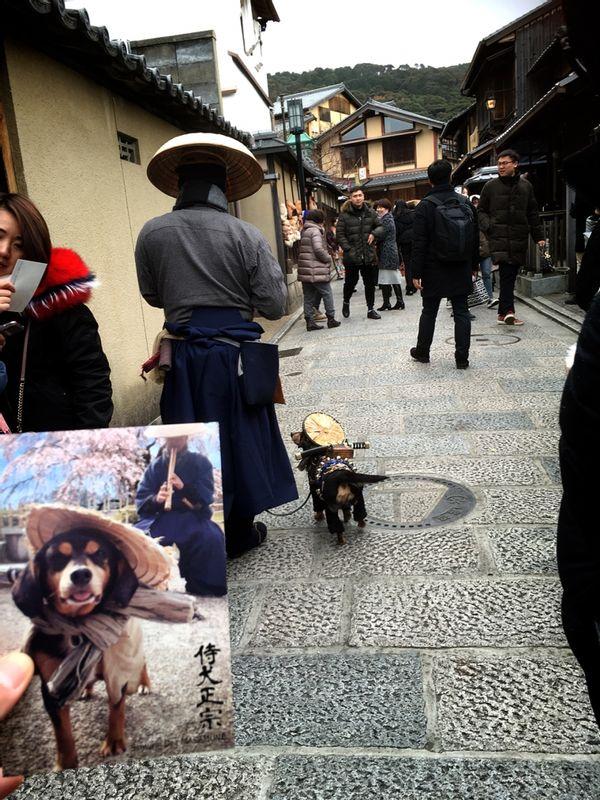 Very rarely appear SAMURAI DOG at Kyoto lol