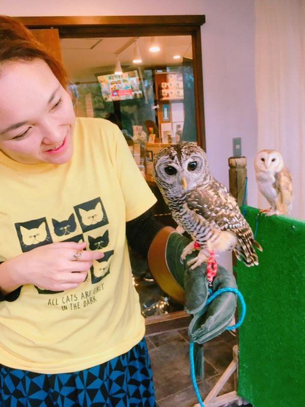 My first owl cafe experience!! Sooooo cute!!