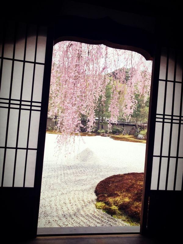 Cherry blossom!