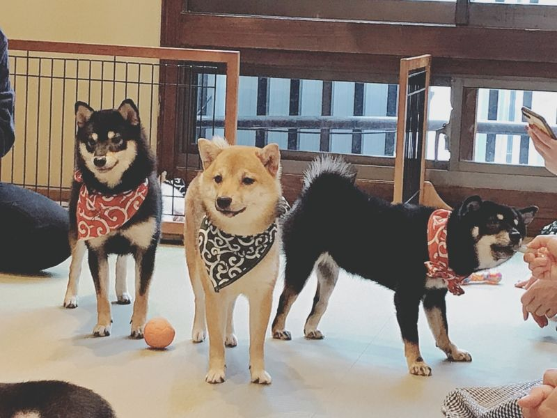 How about Mameshiba dog cafe??