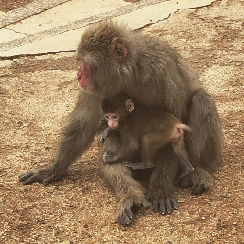 Monkey park is now baby time!!