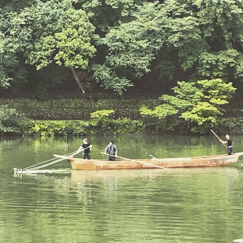Traditional way to fish,,, ukai