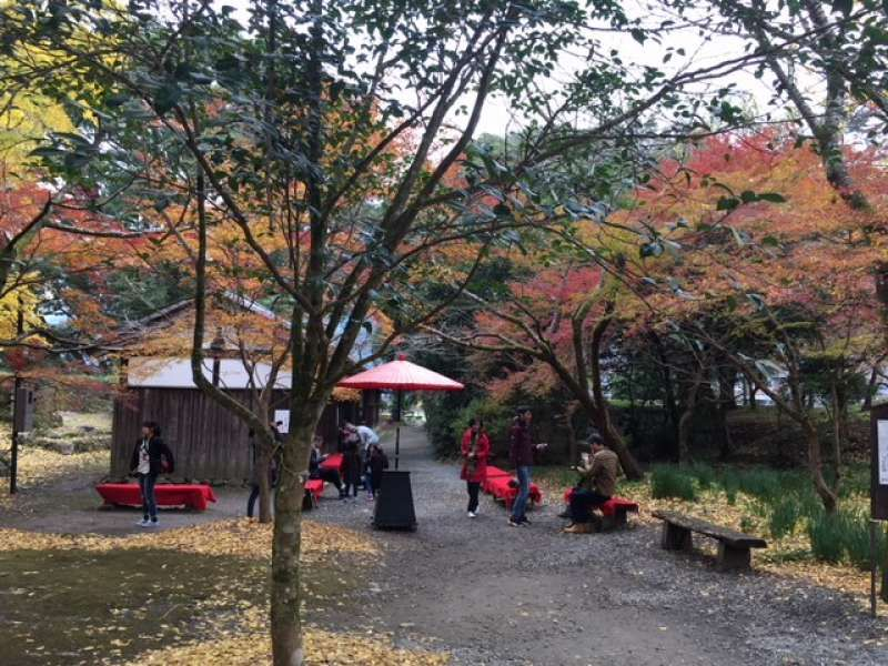 Viewing autumn leaves with matcha tea