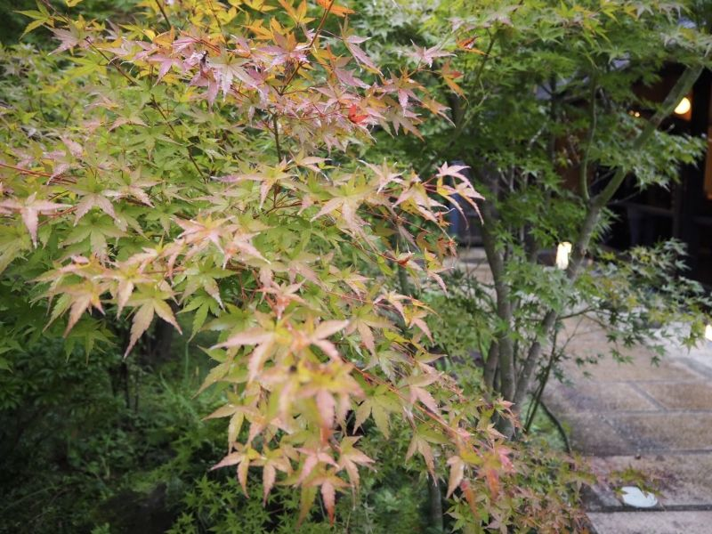 Red leaves in Hakone. Oct 19. 2018