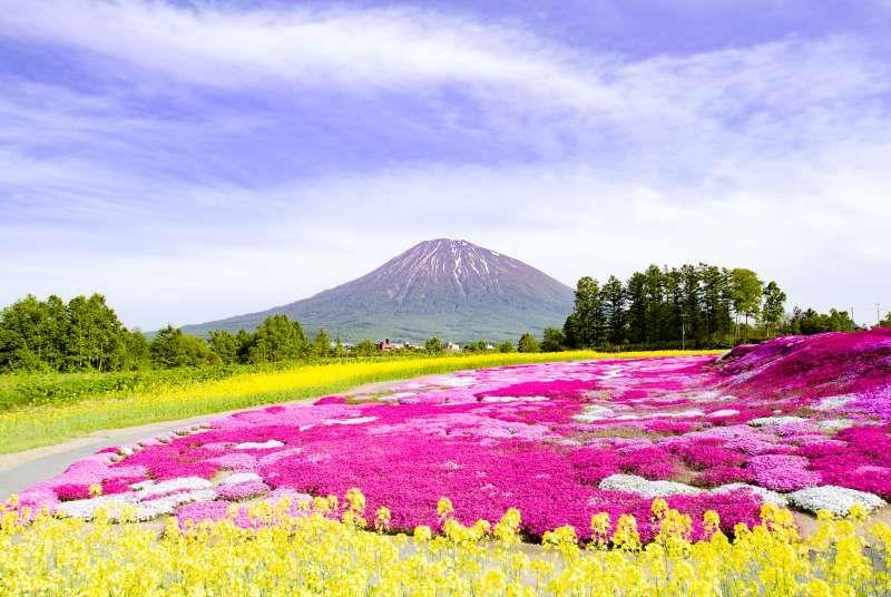 Flower Garden in Niseko