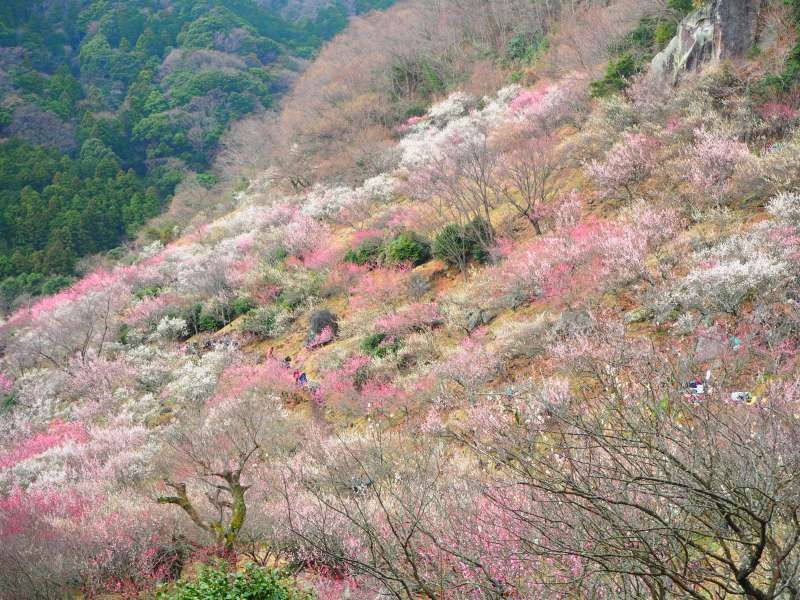 Plum Blossom Hiking Tour