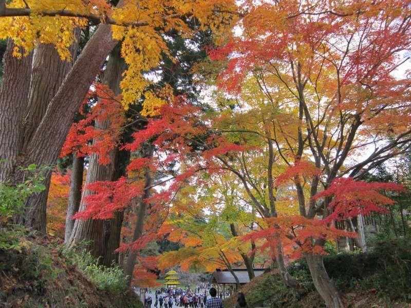 Sehenswert im Herbst auf dem Weg zur Goldenen Halle in der Einfriedigung vom Chuson-ji Tempel auf der Plateau Kanzan. Hiraizumi, Iwate.