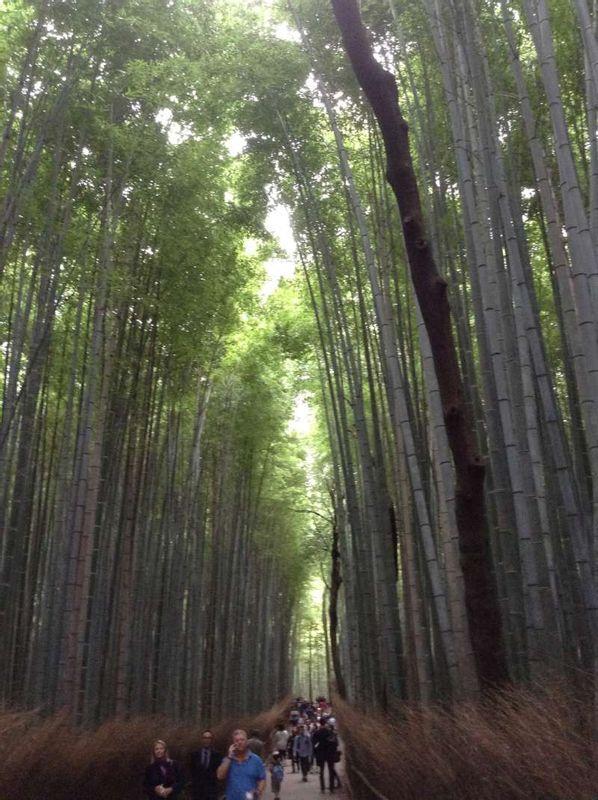 Bamboo forest in Arashiyama (Kyoto)