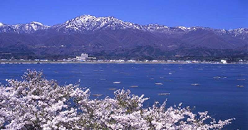Mt,kinpoku;lake kamo:cherry blossoms