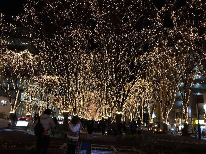 Sendai city is famous for its Christmas lights in December!